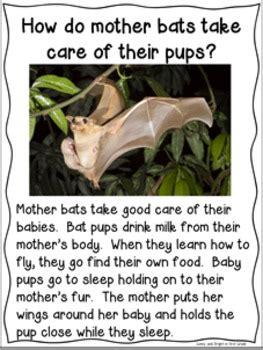 bats  informational texts  kindergarten  grade