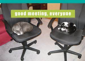 LOL Cat Meeting