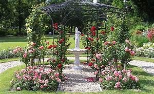 Wann Hortensien Pflanzen : rosen pflanzen rosen pflanzen rose und pflanzen ~ Lizthompson.info Haus und Dekorationen