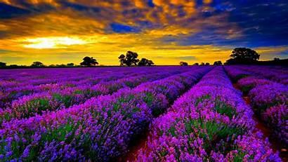 Desktop Widescreen Wallpapers Windows Backgrounds Flowers Definition