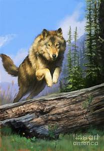 Wolf Run Painting by Rob Corsetti