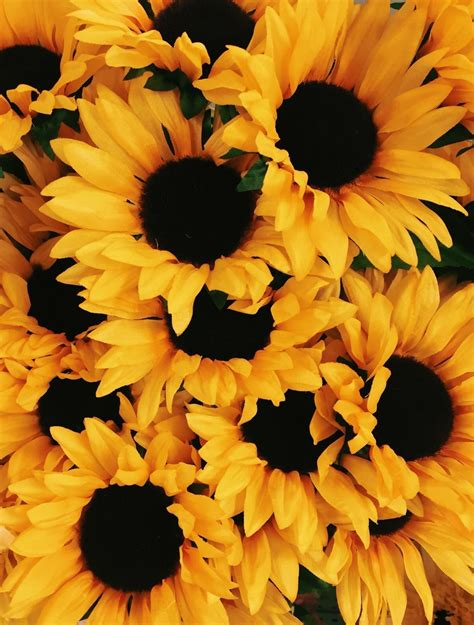 Aesthetic Yellow Flowers Wallpaper Iphone by Travel Aesthetic Wallpaper Yellow Plain W A L L P A P E