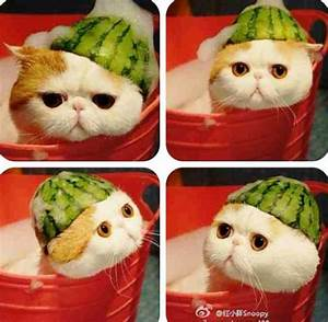 Snoopy Cat Bath | www.pixshark.com - Images Galleries With ...