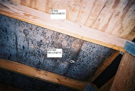 mold  rafters    mold remediation