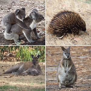 Four Days Of Wildlife  Escape To Kangaroo Island