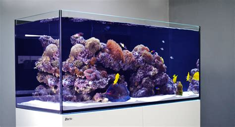 sea reefer rimless reef ready systems for advanced