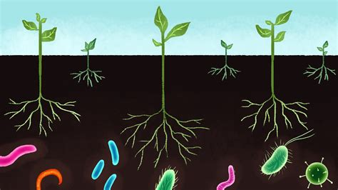 antidepressant bacteria in soil boosts serotonin
