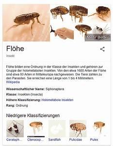 Flöhe In Der Wohnung Was Tun : hundefl he in fell und wohnung bek mpfen ~ Buech-reservation.com Haus und Dekorationen