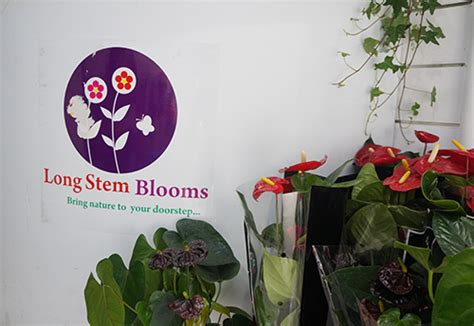 Long Stem Blooms  'bringing Nature To Your Doorstep