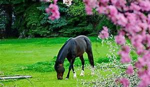 Spring Horse Care Checklist Smartpak Equine Health Library