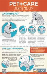 free printable pet cpr and emergency dog pet medical posters how to do cpr on a dog