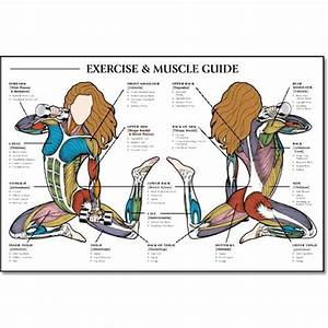 161 Best Images About Anatomy On Pinterest