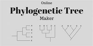 Free Phylogenetic Tree Maker Websites To Create Phylogenetic Tree Online
