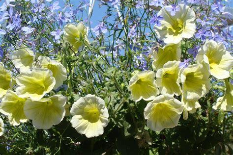 cuisiner les fleurs cuisiner avec des fleurs les quatre saisons