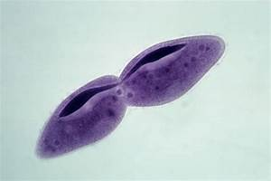 Common Types of Asexual Reproduction