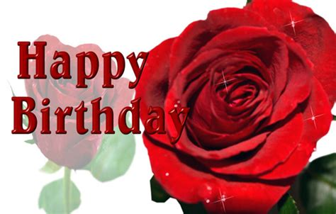 birthday greeting  rose  birthday   ecards