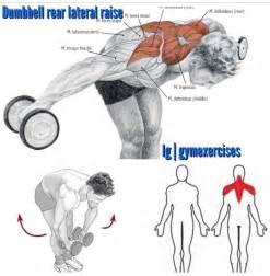 db rear lat raise back exercises pinterest