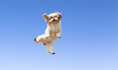 dogs jumping  joy dogtime