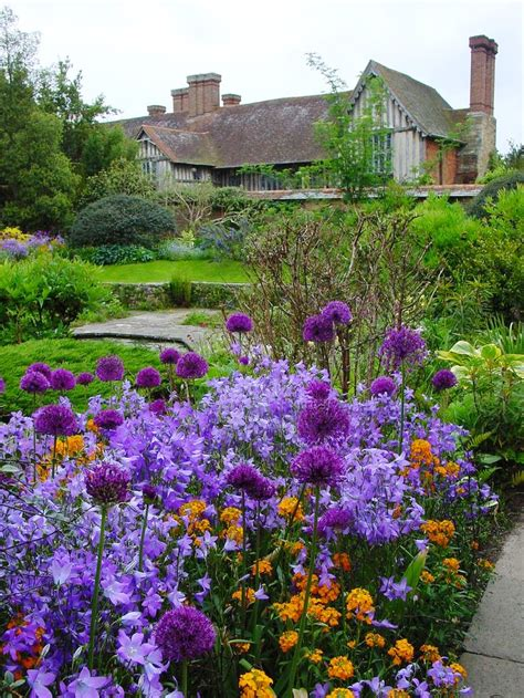 purple campanula bell flower  cottage garden start