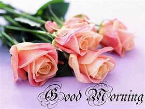Good Morning Pink Roses HD Images and Pictures | Festival ...