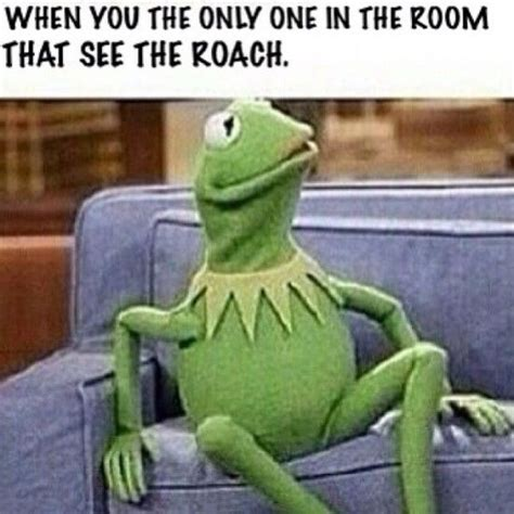 Funny Muppet Memes - 25 best ideas about kermit the frog meme on pinterest frog meme kermit the frog quotes and