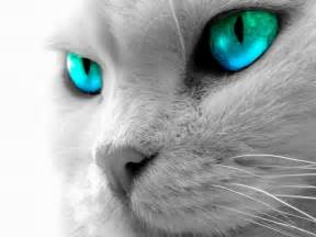 cat s eye cutest cat around world cat