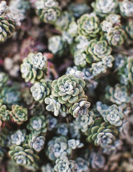 types of succulent plants 17 best ideas about types of succulents on pinterest succulents succulent plants and