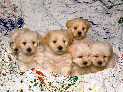 Dog Wallpapers Puppy 1600 1680 2560 1050