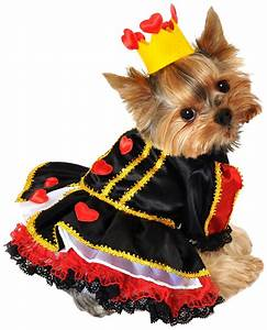 adorable costumes for small dogs and large dogs