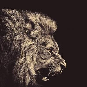 Sfondi della Settimana ecco il re della giungla!!