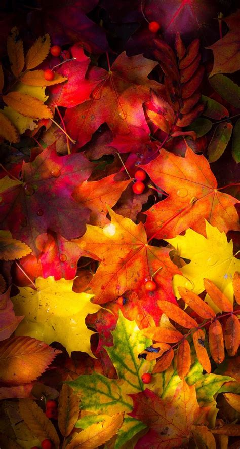 Fall Iphone Wallpaper Leaves autumn leaves wallpaper in 2019 autumn leaves wallpaper