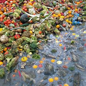 Americans Throw Out More Food Waste Than Actual Trash