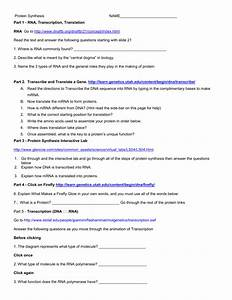 Dna Rna And Protein Synthesis Worksheet Answers