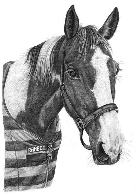 horse drawings  angela  pencil sketch portraits