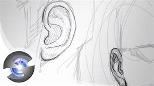 How To Draw Ears Front View | www.imgkid.com - The Image ...