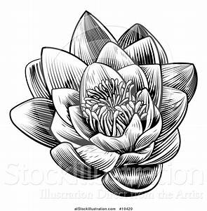 Vintage Flower clipart lotus flower - Pencil and in color ...