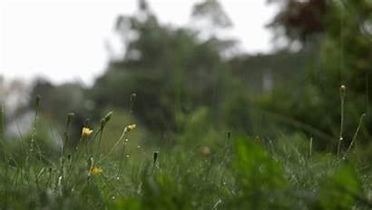 Rain Raining Nature Falling Flowers Flower Country