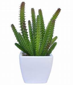 Ginni Bloom Artificial Cactus Succulent: Buy Ginni Bloom