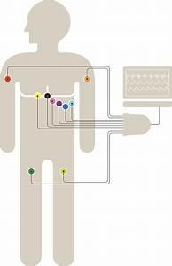 Ecg Ekg Wiring Diagram Stock Illustration