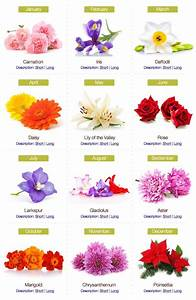Best 25+ Birthday month flowers ideas on Pinterest | Month ...