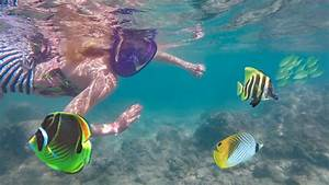 SWIMMING WITH TROPICAL FISH IN HAWAII! 🐠 - YouTube