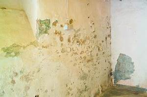 Salpeter In Der Wand : salpeter im mauerwerk erkennen und richtig entfernen lassen ~ A.2002-acura-tl-radio.info Haus und Dekorationen