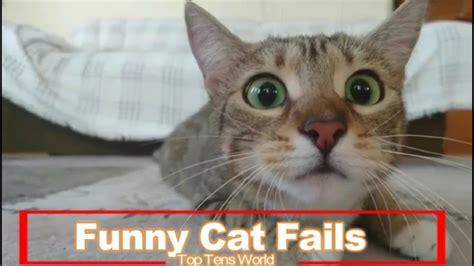 funny cat fails compilation  top tens world cats