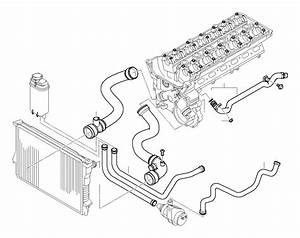 Bmw 528i Water Hose  Hoses  Engine  Cooling