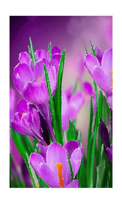 Flores Flowers Spring Gifs Exotic Nature Animated