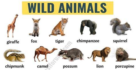 Wild Animals: List of 45+ Wild Animals Names in English