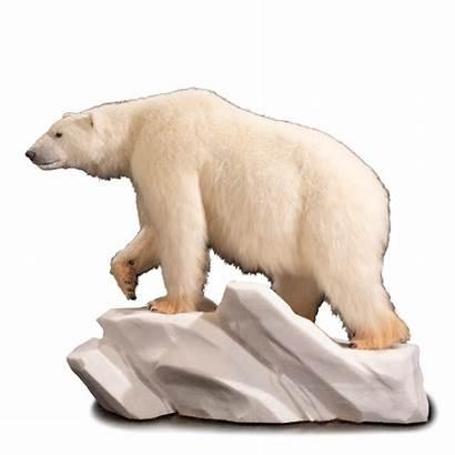 Polar Bear Replica Kanati Rp101 Pose