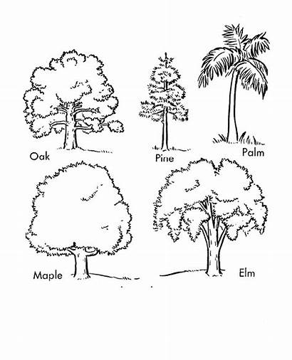 Trees Cartoon Coloring Arbor Types Different Printout