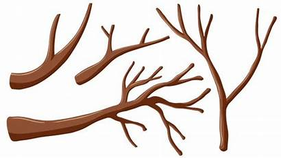 Tree Branches Vector Different Shapes Branch Trunk