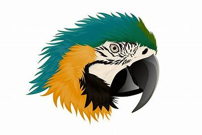Macaw Parrot Vector Realistic Clipart